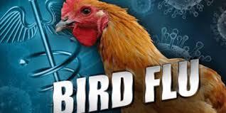 Bird flu breaks out in NW